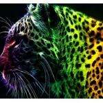 1leopard